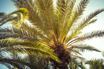 Palm trees leaves against the sky