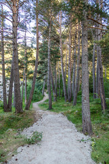 Trail in a coniferous forest in the mountains. Travel concept
