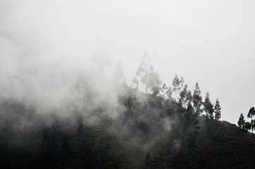 Forest in thick fog on the white background