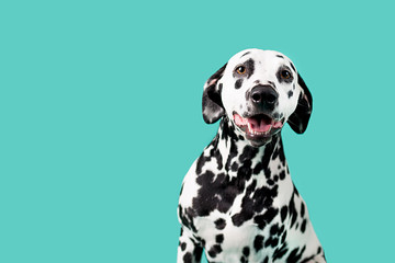 Beautiful Dalmation Dog on Colored Background Wall mural