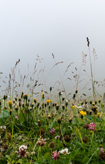 Morning over a wildflower meadow with a foggy sky background and dew on ther plants