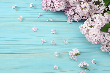 pink lilac flower on blue wooden background. top view with copy space