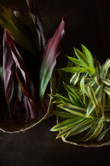 Tropical plants in baskets