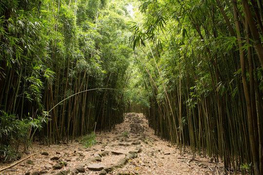 Path through Na'ili'ili-haele forest, Maui, Hawaii, USA
