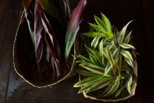 Hawaiian ti and lemon lime plants in baskets