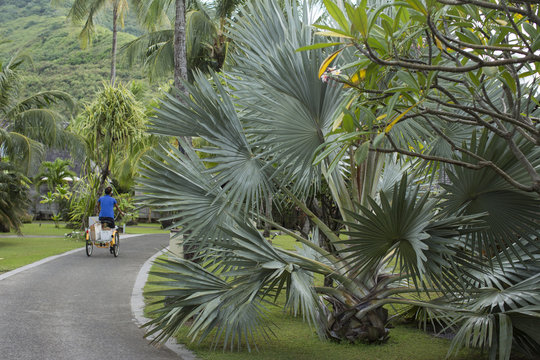 Man riding three wheel bicycle in tropical landscape