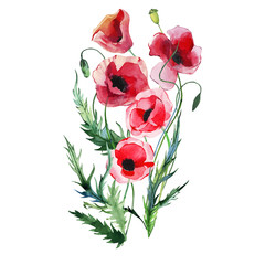 Beautiful bright lovely summer autumn herbal floral red poppies flowers with green leaves bouquet watercolor hand illustration. Perfect for greetings card, textile, wallpapers, banners