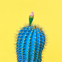 Trendy tropical Cactus plant on Yellow Color background. Minimal Art Concept. Creative Style.
