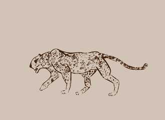 Cheetah. Hand drawn ink sketch. Horizontal drawing. Vector engraving. Predator line art. Brown line illustration isolated on light beige background. Safari concept.