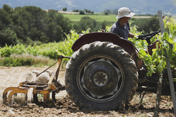 Side view of farmer sitting on tractor at farm