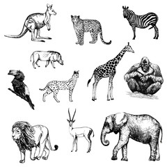 Set of hand drawn sketch style animals isolated on white background. Vector illustration.