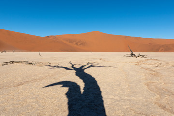 Tree shadow on white clay pan with red sand dunes in the background, deadvlei, Sossusvlei, Namib Naukluft National Park Namibia