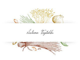 Hand Drawn Autumn Vegetables of Celery, Chives, Fennel and Garlic