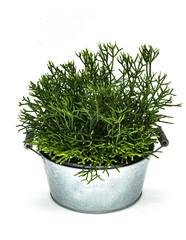 Decorative pot of succulent