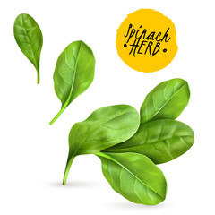 Realistic Herb Spinach