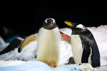 Penguins closed in Zoo, with good conditions to life.