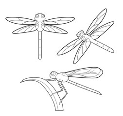 Insect Set Cute Dragonfly Cartoon Vector Coloring Book