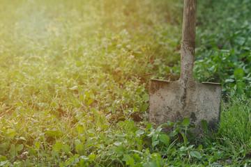 an old shovel stuck into the earth dug in the garden