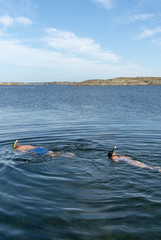 Snorkeling on the Swedish west coast