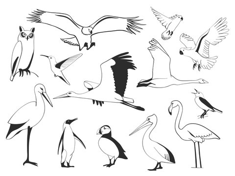 Hand drawn bird set, vector