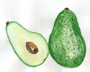 Avocado fruit watercolor