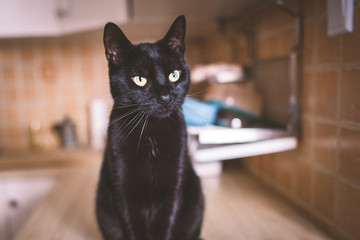 A black cat sitting on kitchen worktop and meowing