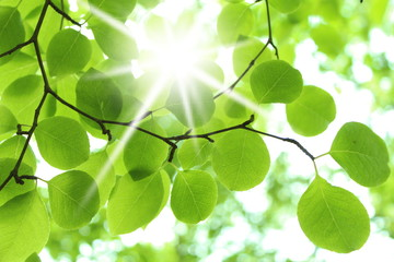 日差し 新緑