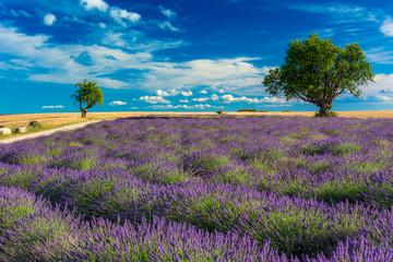 Champs de lavande et amandiers en Haute-Provence