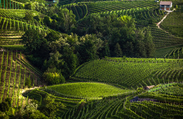 The picturesque landscape full of vineyards around the town of Valdobbiadene, an area renowned for...