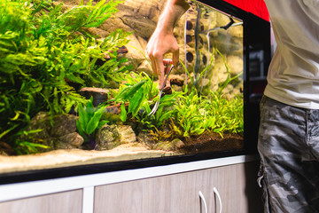 Man cleaning aquarium and cutting underwater plants.