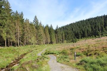 Nature Woodland Landscape Background