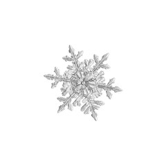 Snowflake isolated on white background. Macro photo of real snow crystal: small stellar dendrite with six long, ornate arms with side branches, fine hexagonal symmetry and glossy relief surface.