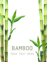 Fresh bamboo on white background