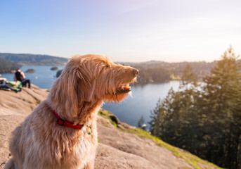 A happy dog at the top of a viewpoint on a sunny day.