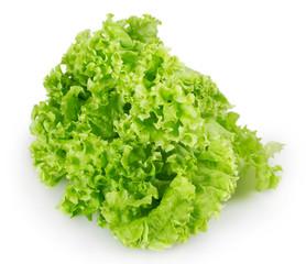 Fresh lettuce salad