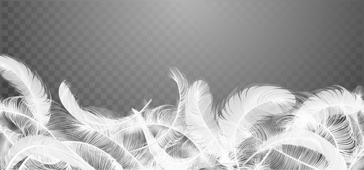 Vector white feathers collection, set of different falling fluffy twirled feathers, isolated on transparent background. Realistic style, vector 3d illustration. Fotoväggar