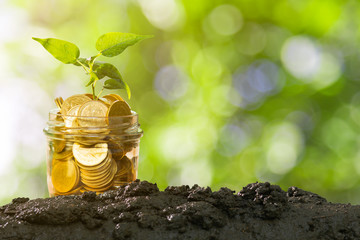 Plant Growing In Savings Coins On Soil With Green Bokeh Background, Business Finance and money concept.