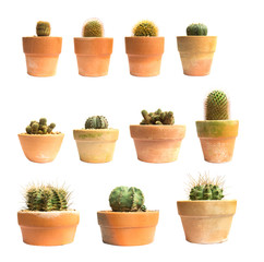 Set of pot cactus plant isolated on white background.