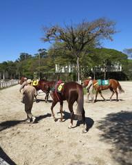 horse racing thoroughbred english