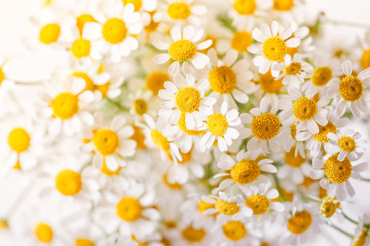 Macro photography of little daisy flowers bouquet over white. Soft focus, top view, close-up composition.
