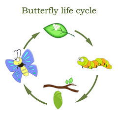 Butterfly life cycle in a cartoon style. Vector illustration.