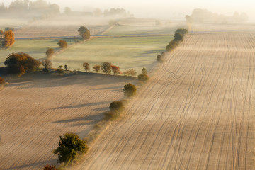 Tree line on the fields in the fall with fog
