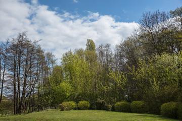 Landschaft mit Wiese vor Bäumen