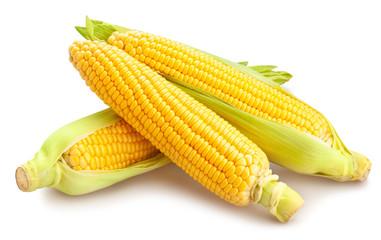 Poster de jardin Graine, aromate corn