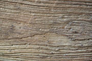 Regular texture of wood