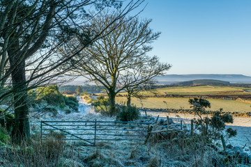 Gate and Frost