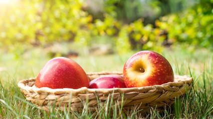 Äpfel in einem Korb auf einer Wiese