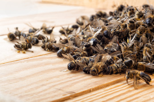 Dead bees in the middle of the hive. Death of bees. Mass poisoning of bees.