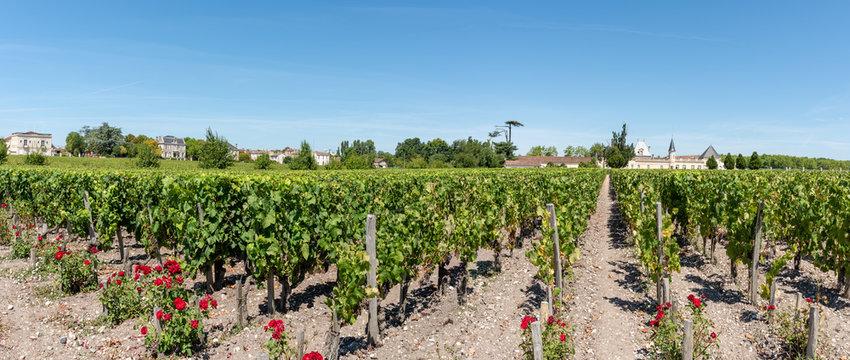 MEDOC (Gironde, France), vignoble de Margaux