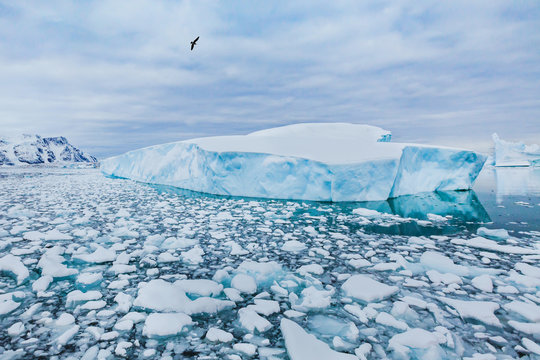 Antarctica nature beautiful landscape, bird flying over icebergs
